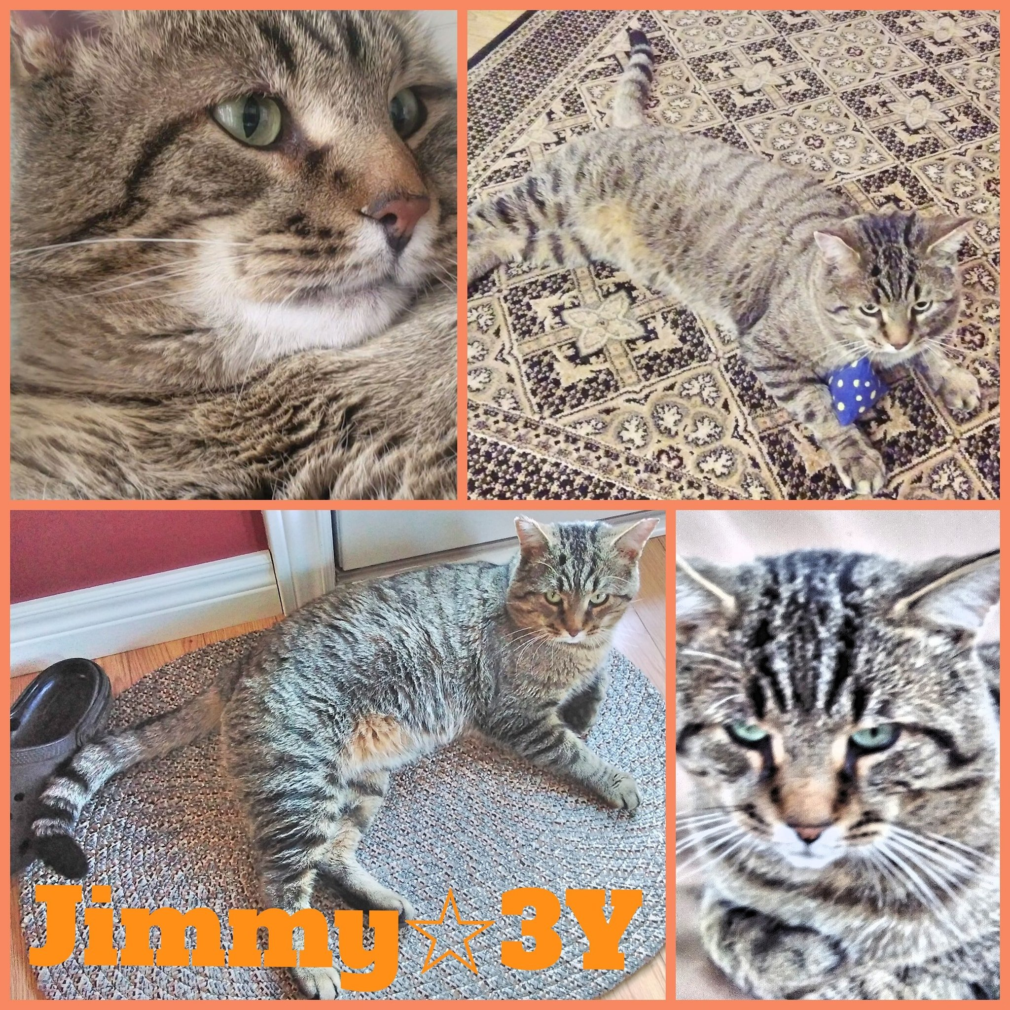 Jimmy- Male- 3 Years
