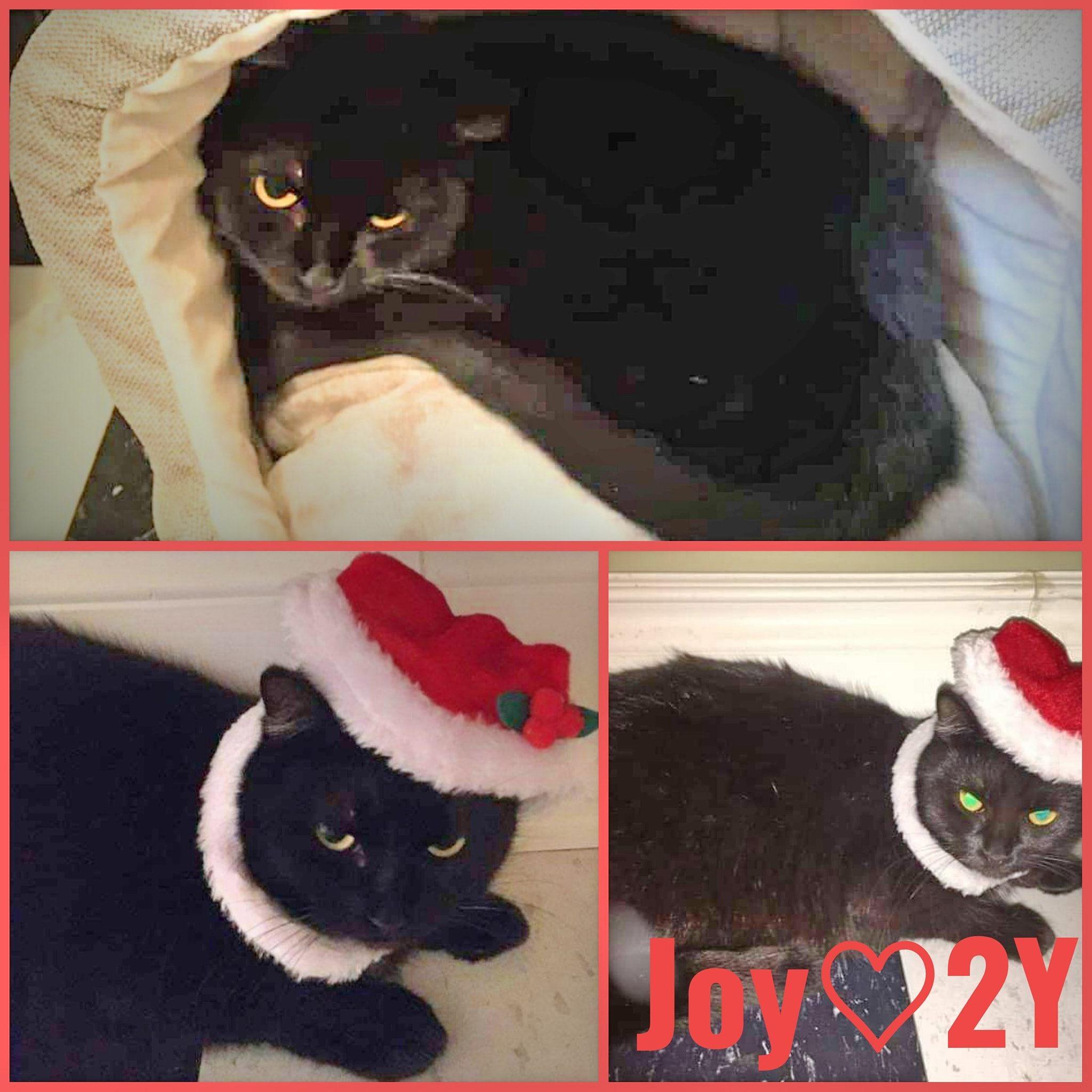 Joy-Female-2 Year