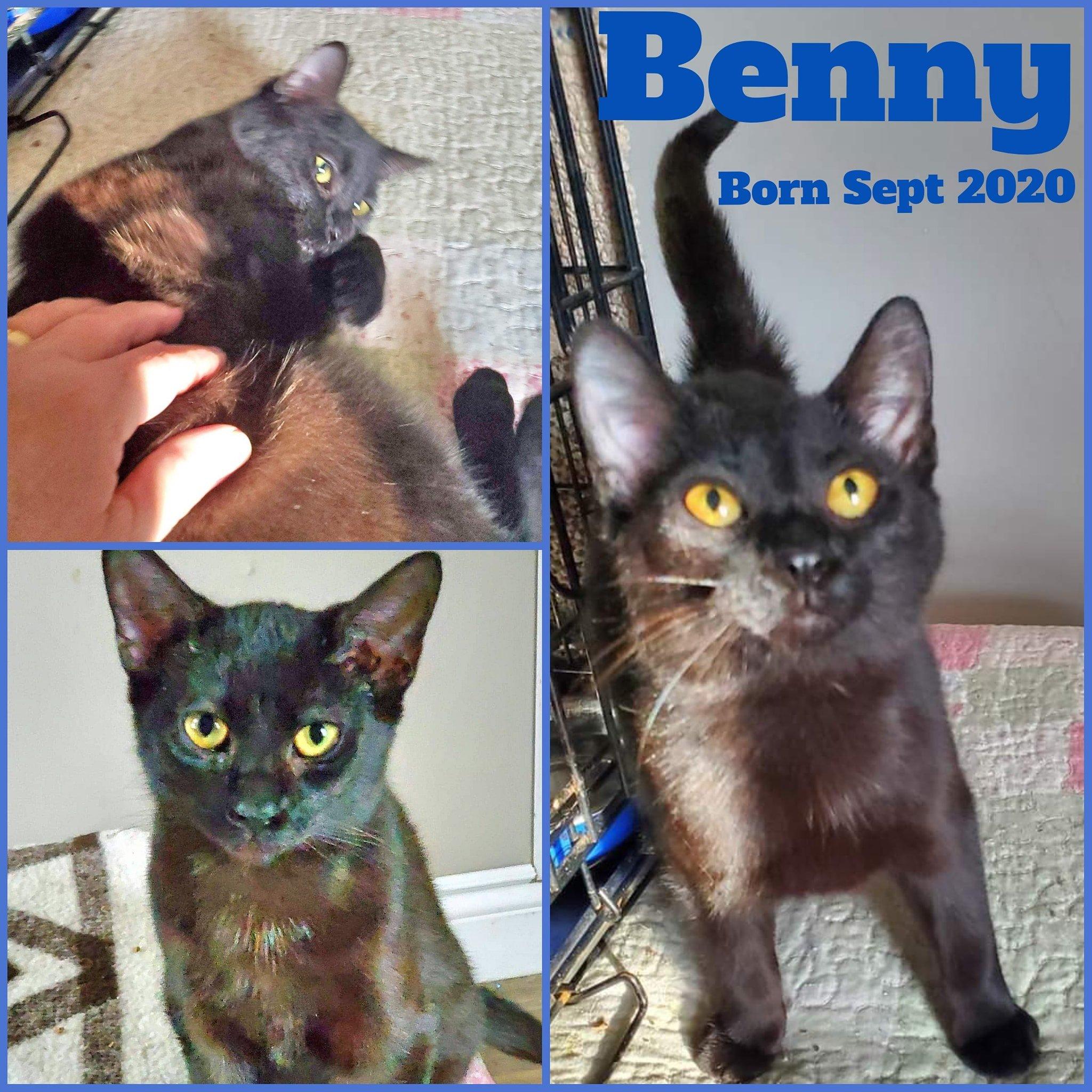 Benny-Male-Born Sept 2020