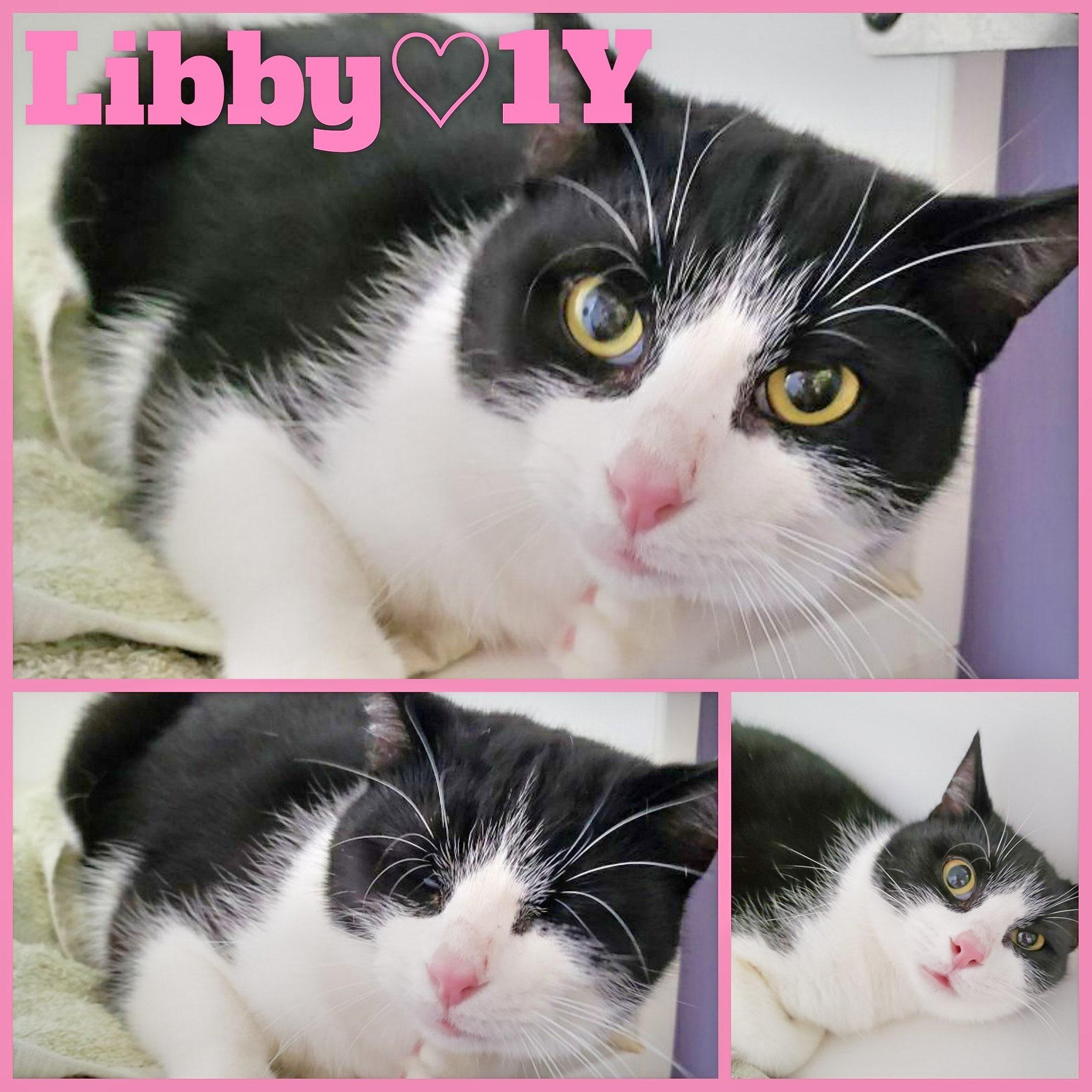Libby-Female- 1 Year
