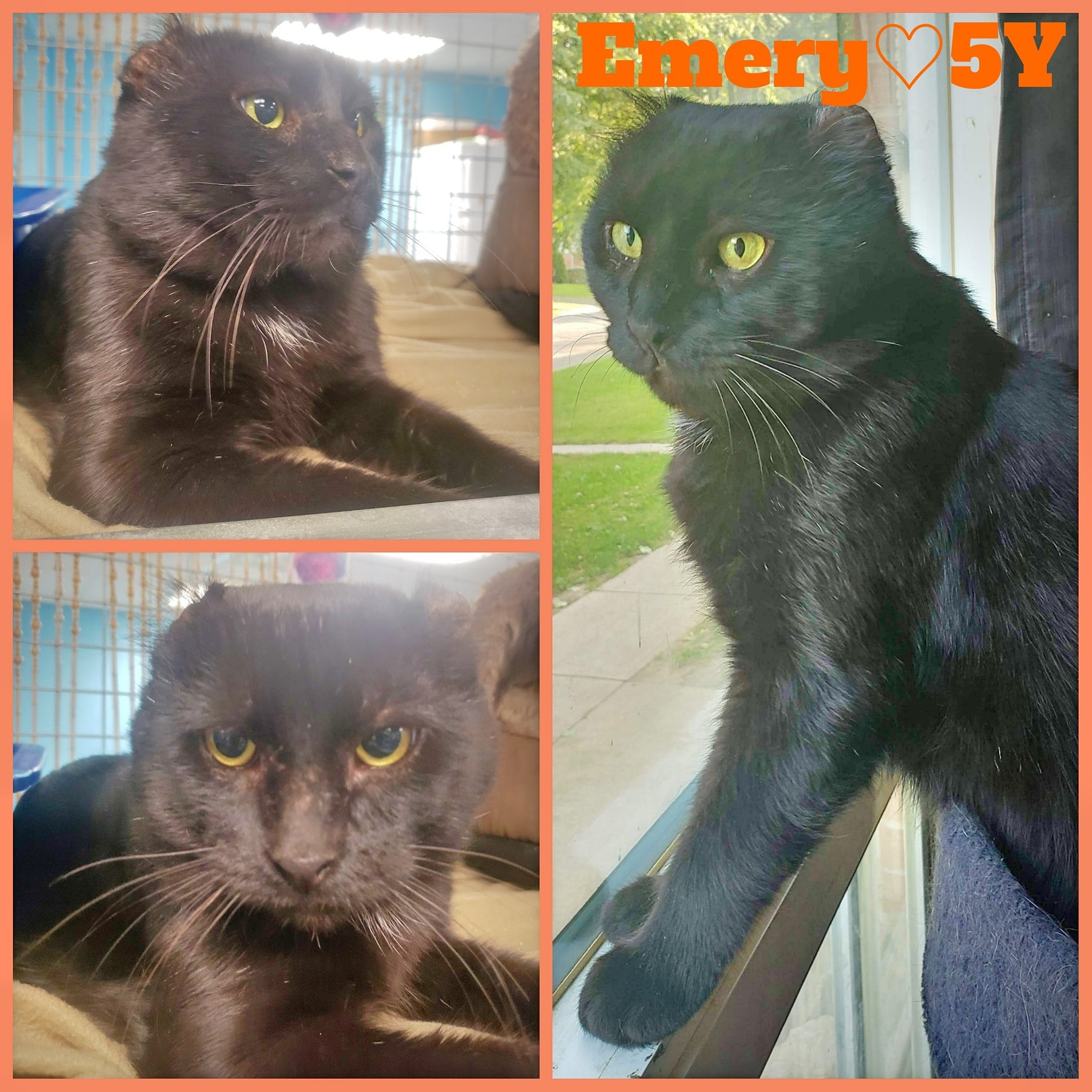 Emery-Male- 5 Years–ADOPTION PENDING