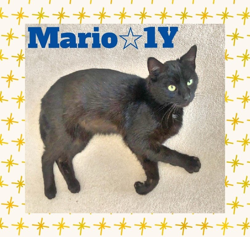 Mario-Male-1 Year old