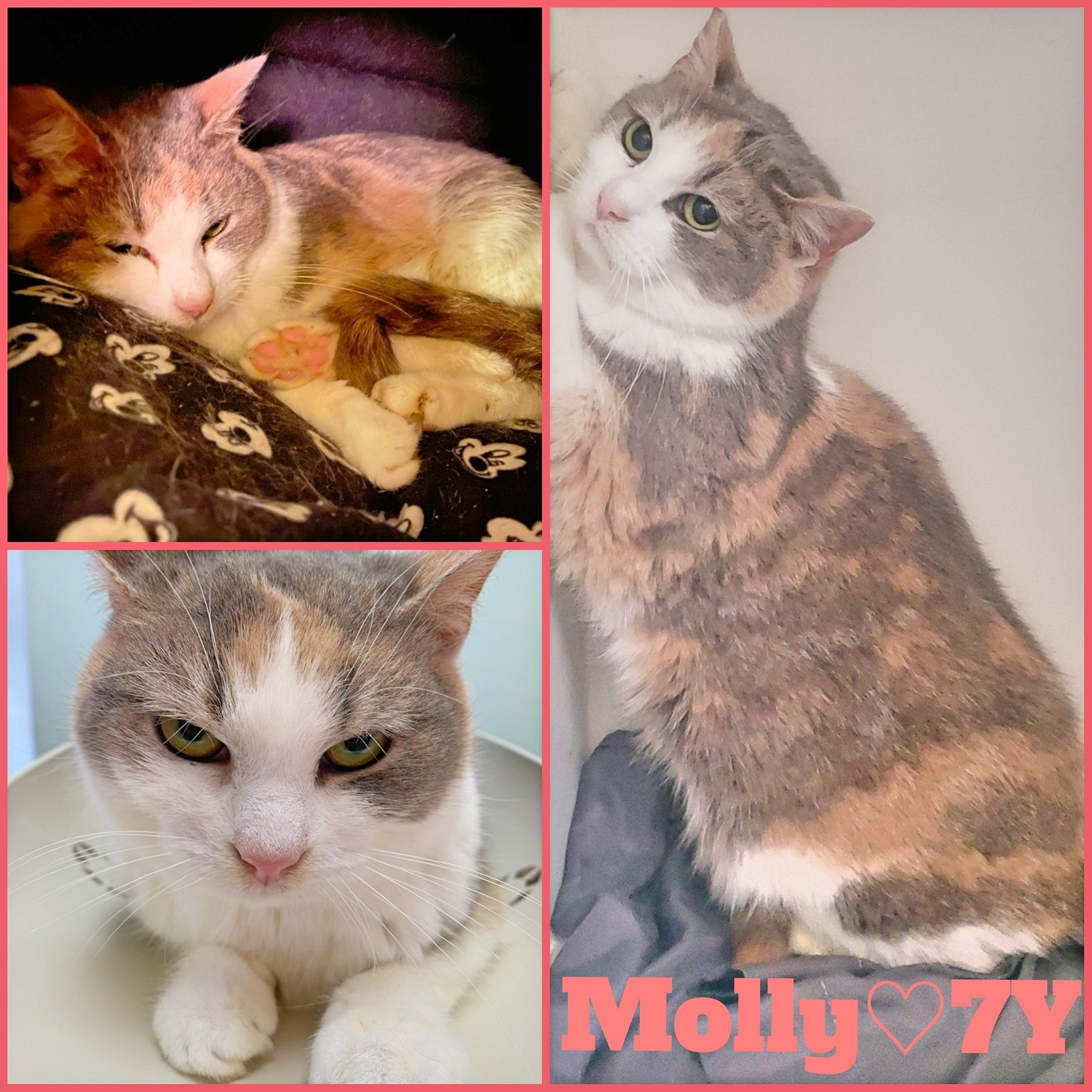 Molly- Female- 7Years-ADOPTION PENDING