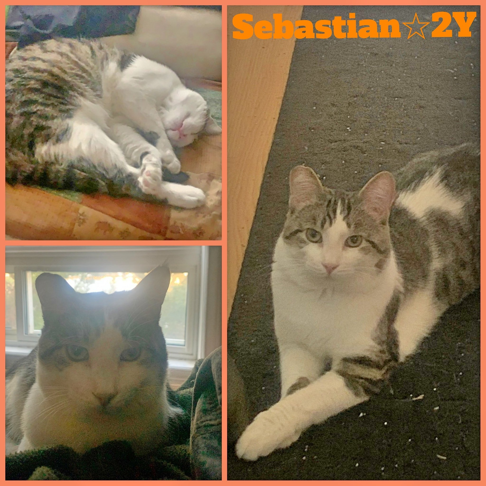 Sebastian-Male- 2 Years old