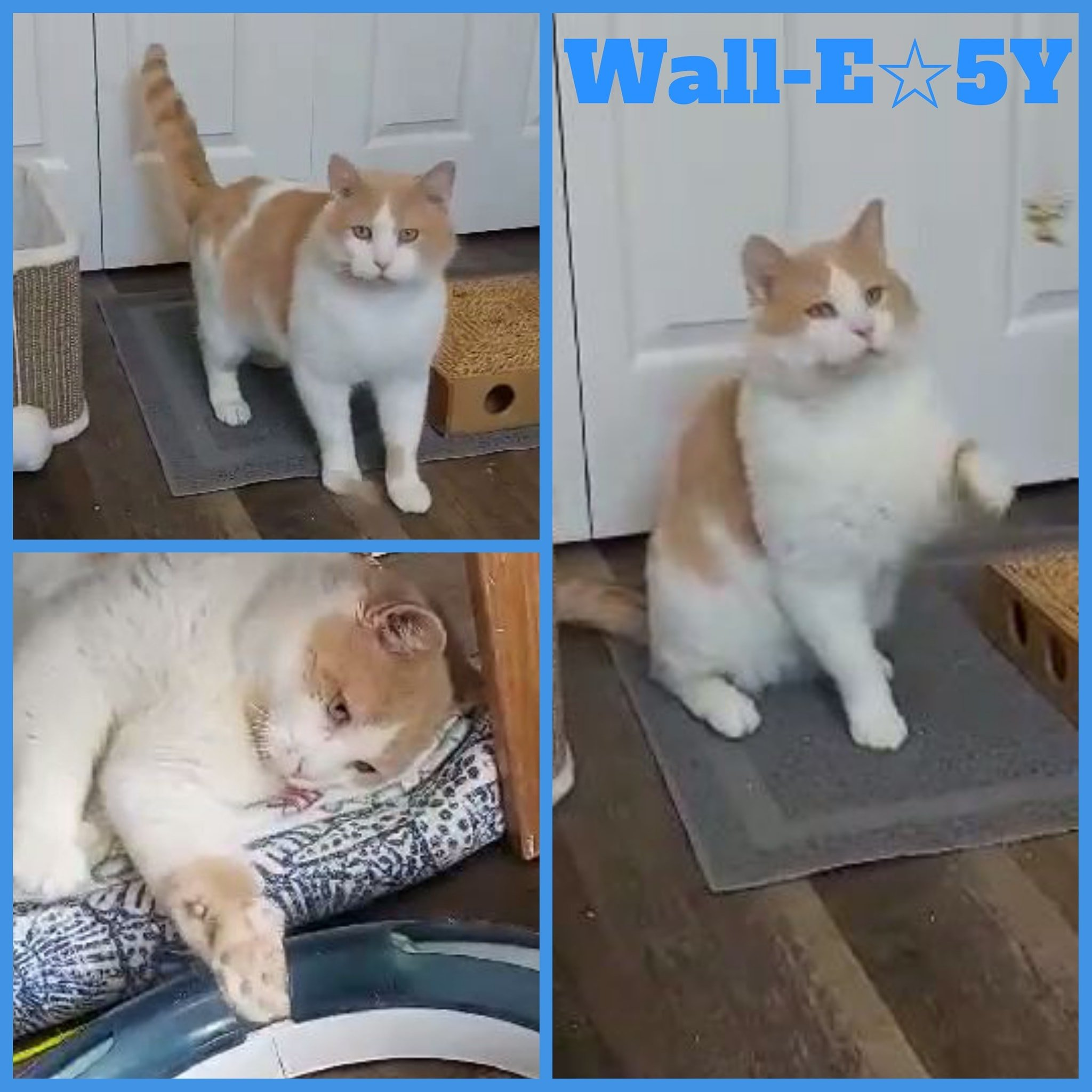Wall-E/Male/ 5 Years old–ADOPTION PENDING