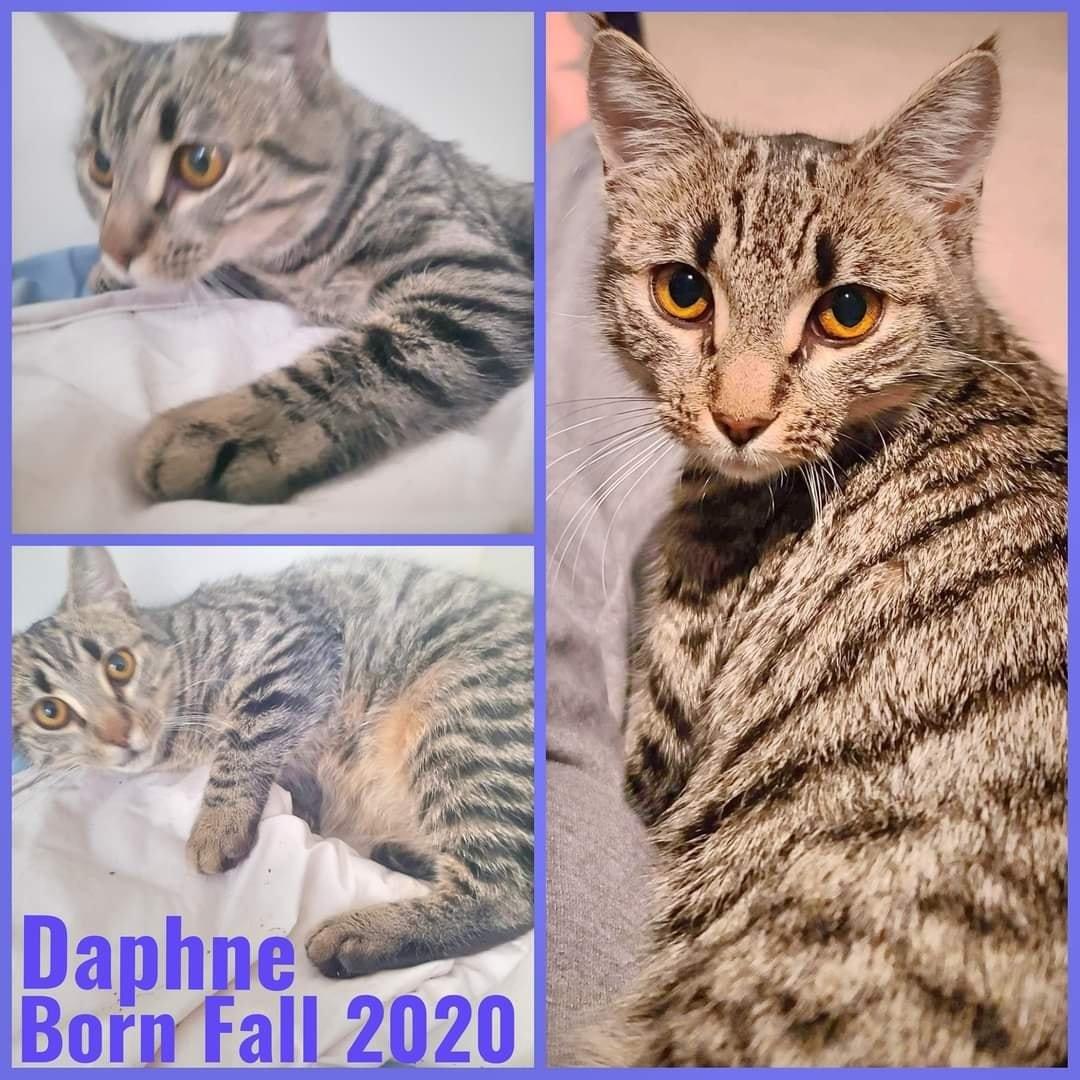 Daphine-Female- Born in Fall 2020
