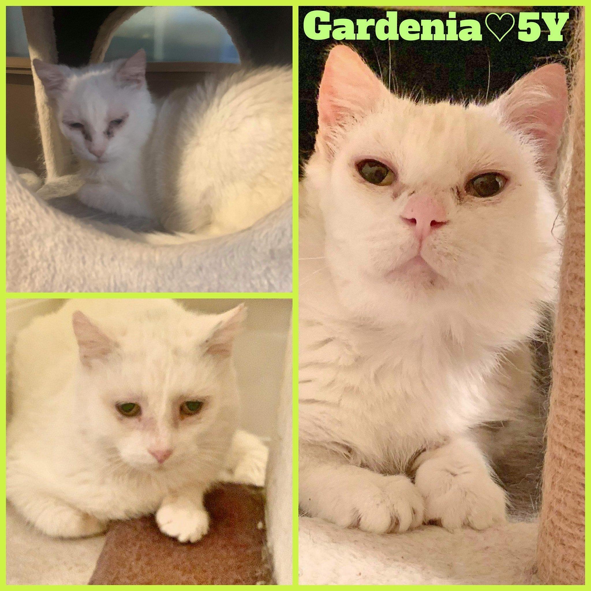 Gardenia-Female- 2 Years
