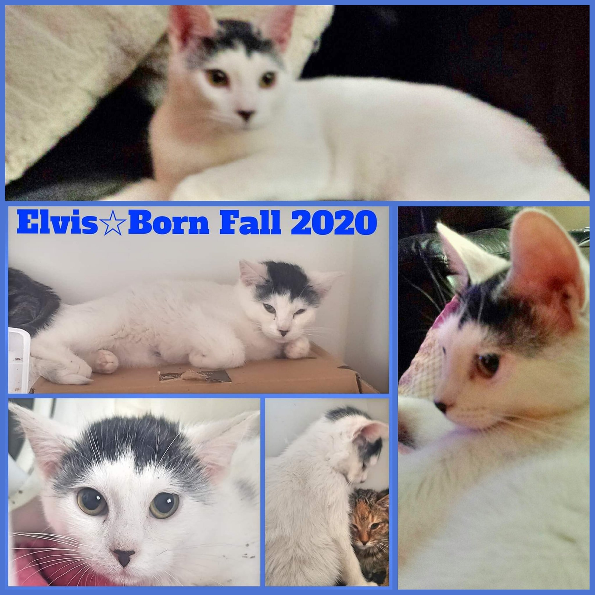 Elvis-Male-Born in Fall 2020–ADOPTION PENDING