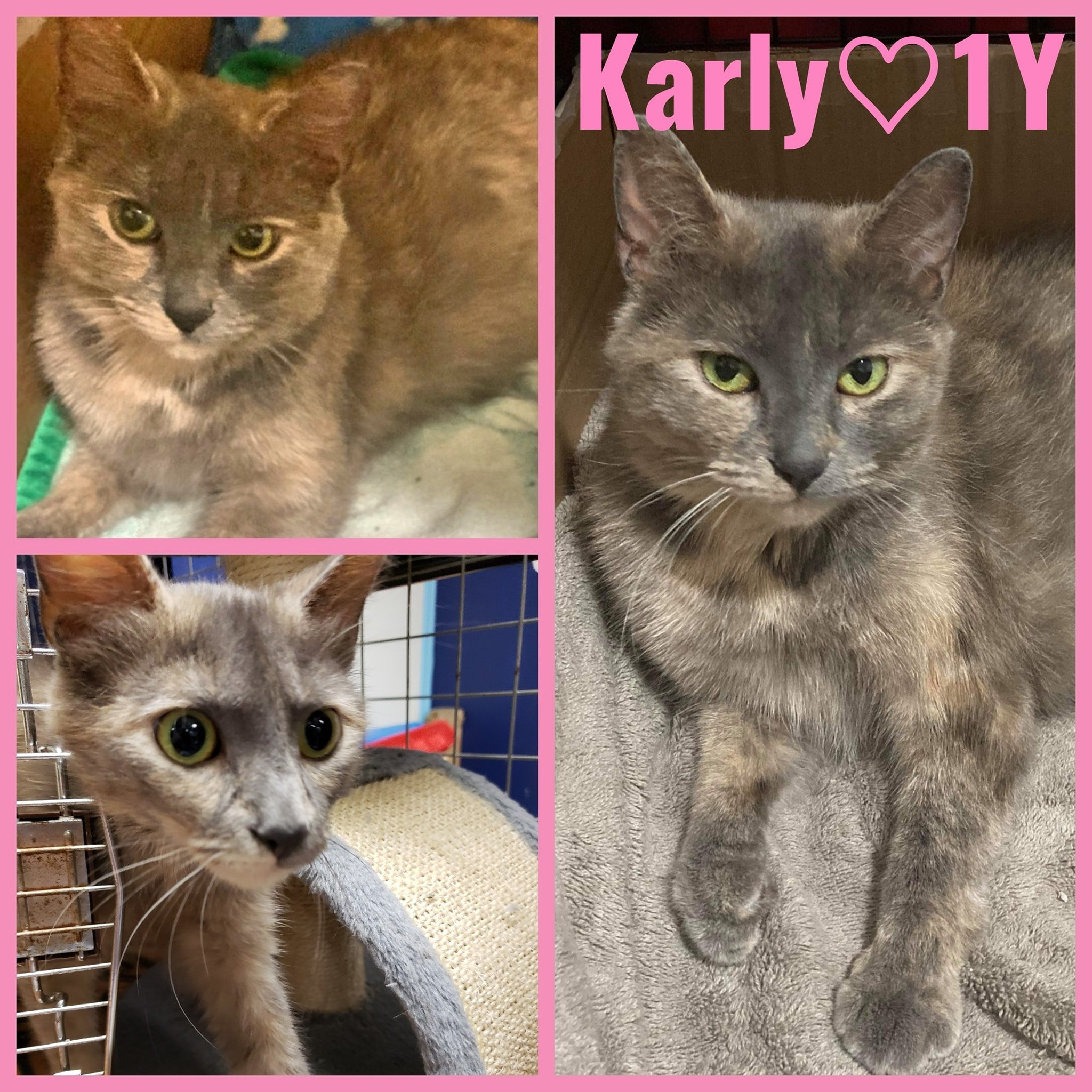 Karly-Female- 1 Years old