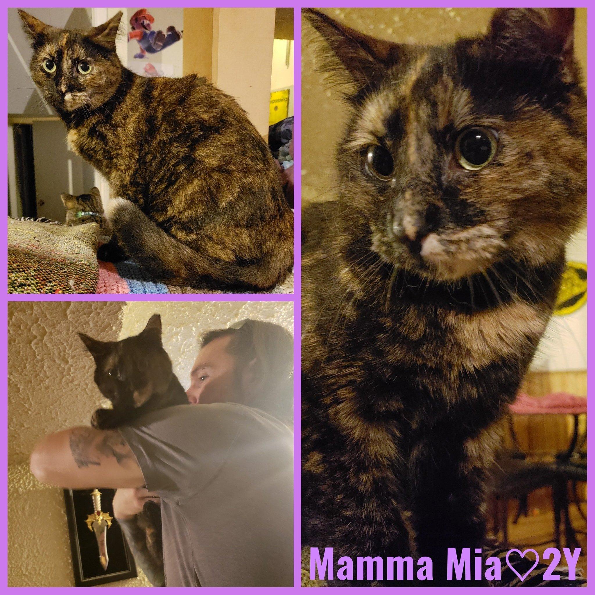 Mamma Mia-Female- 2 Years old