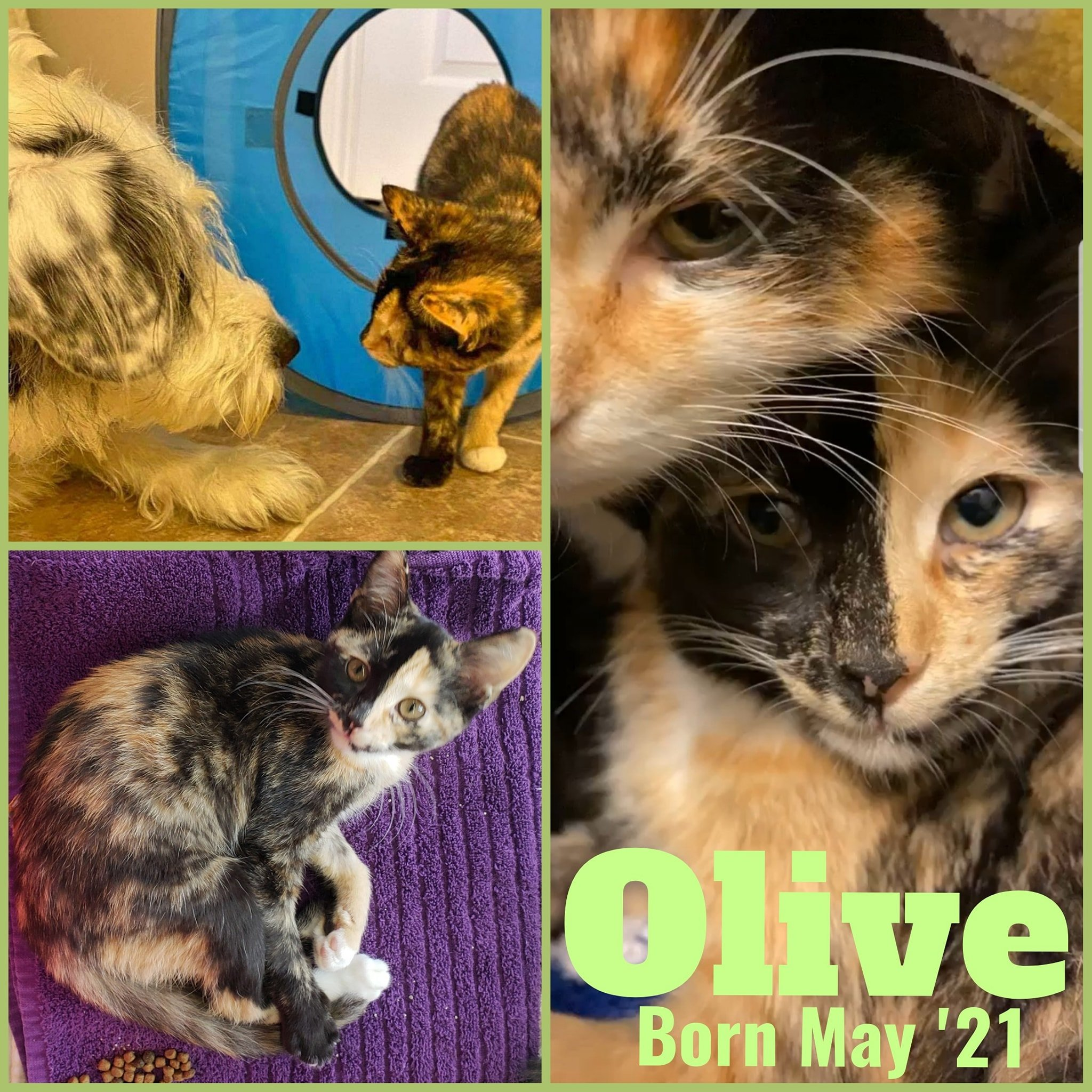 Olive-Female-Born May 21-ADOPTION PENDING