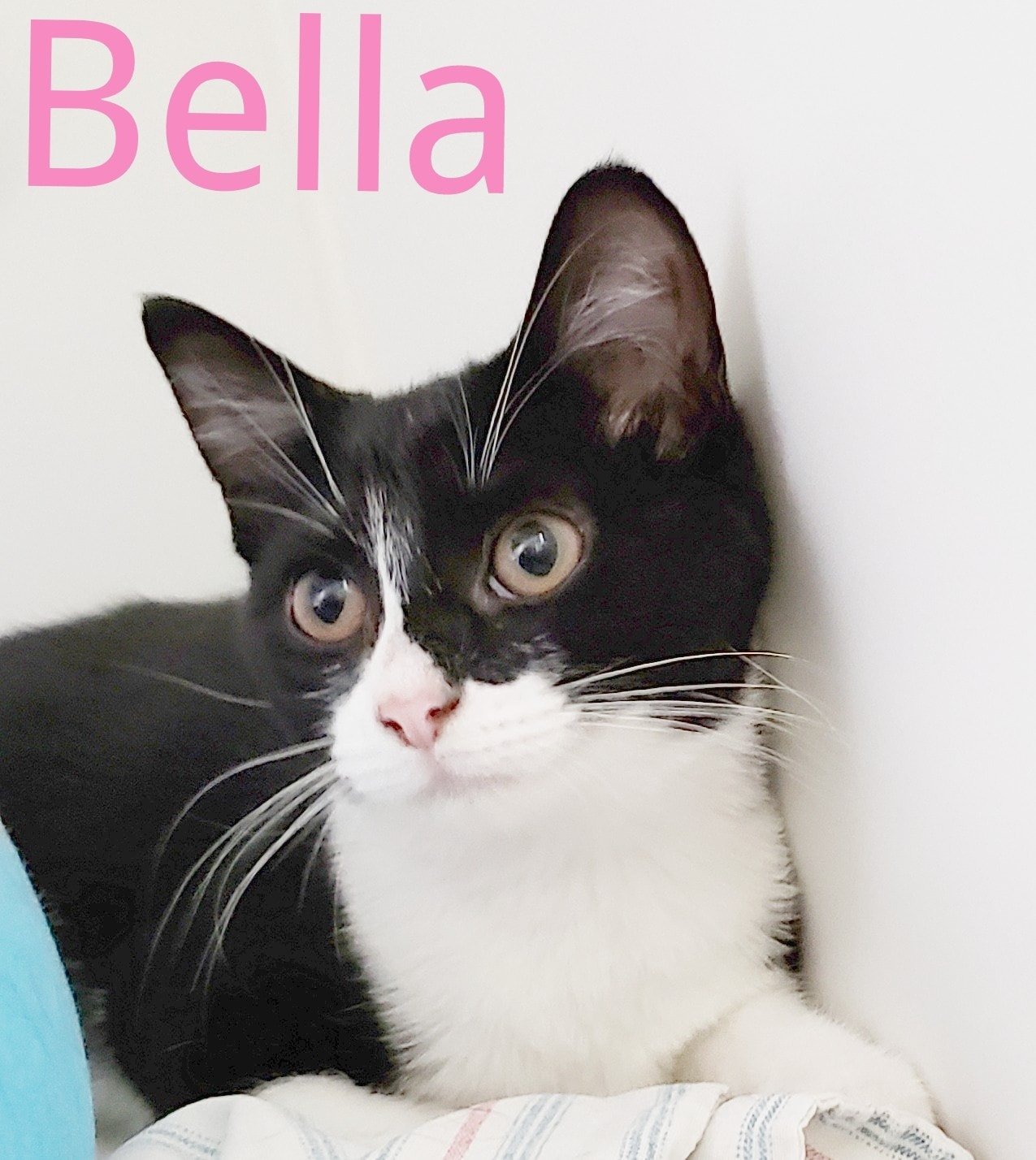 Bella-Female-Born in April 2021