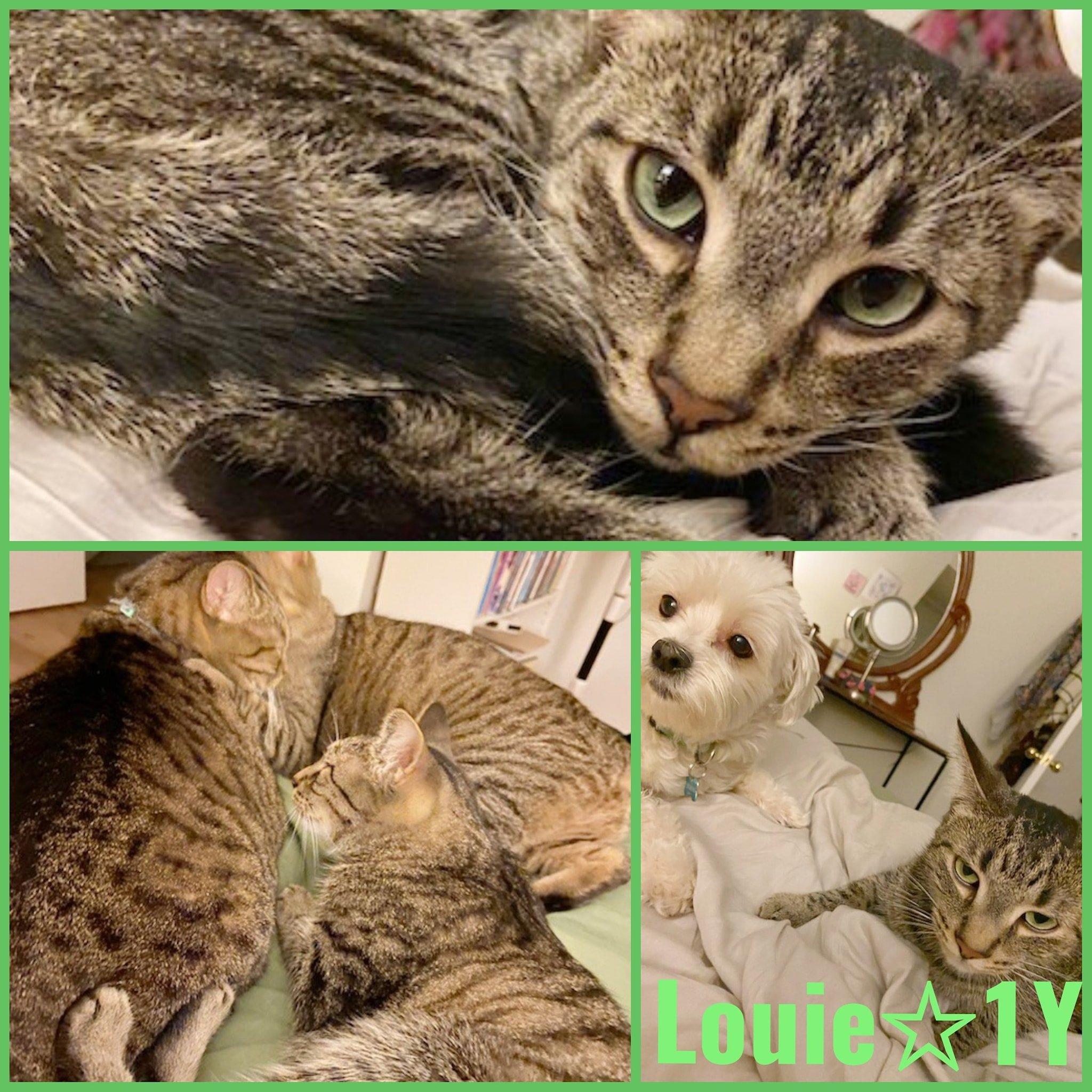 Louie-Male-1 Year