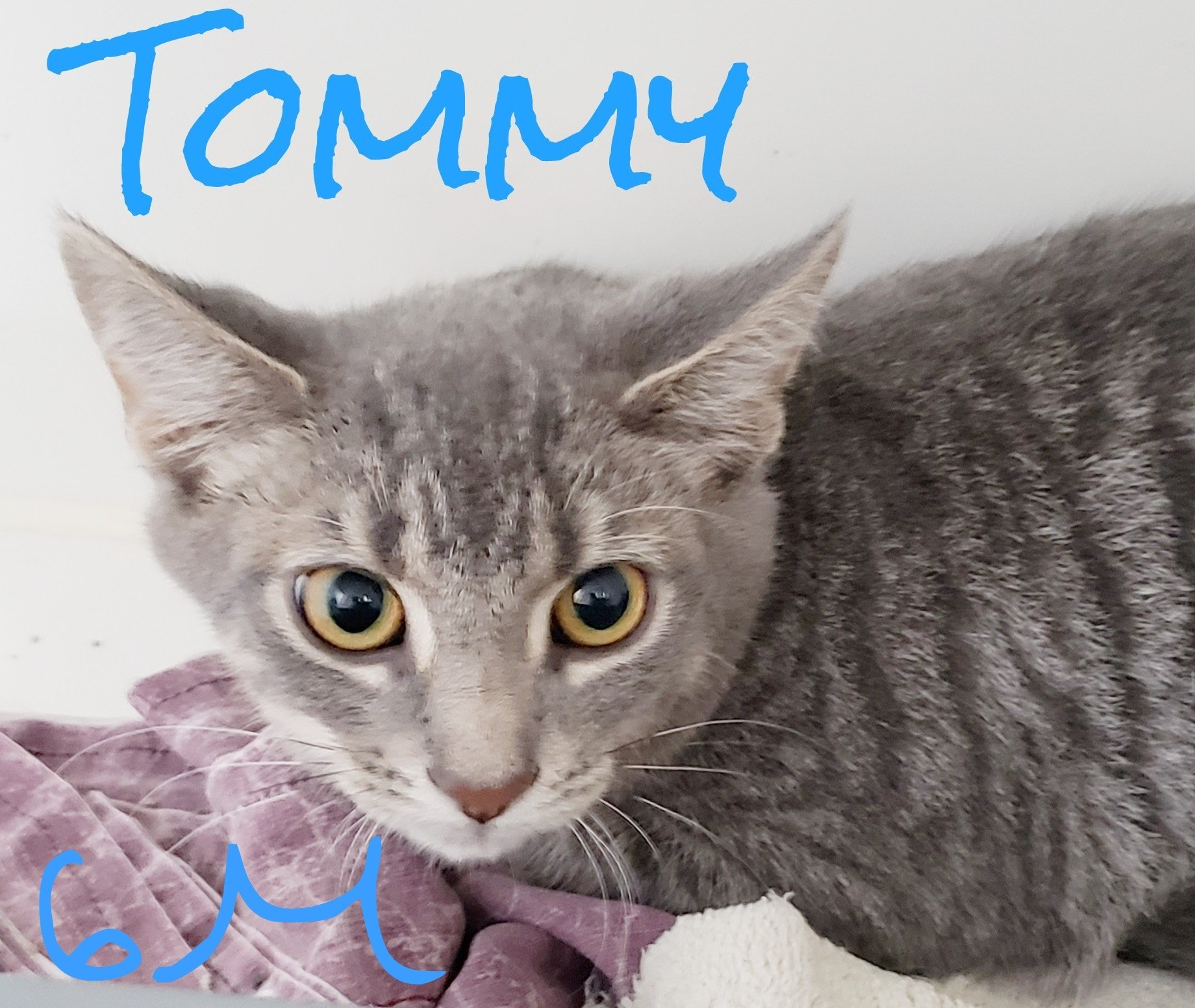 Tommy-Male-Born in April 21